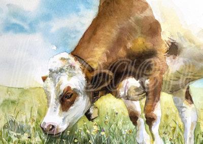 Aquarelle vache